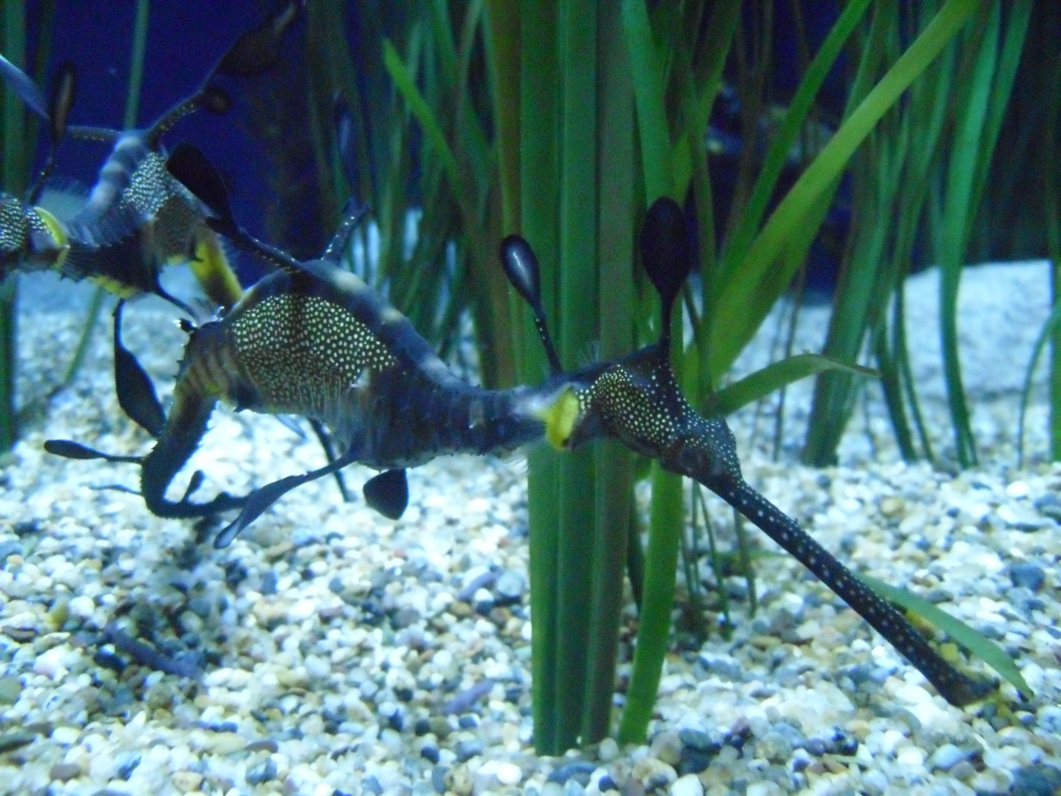 monterey bay aquarium – Rebecca Heisman