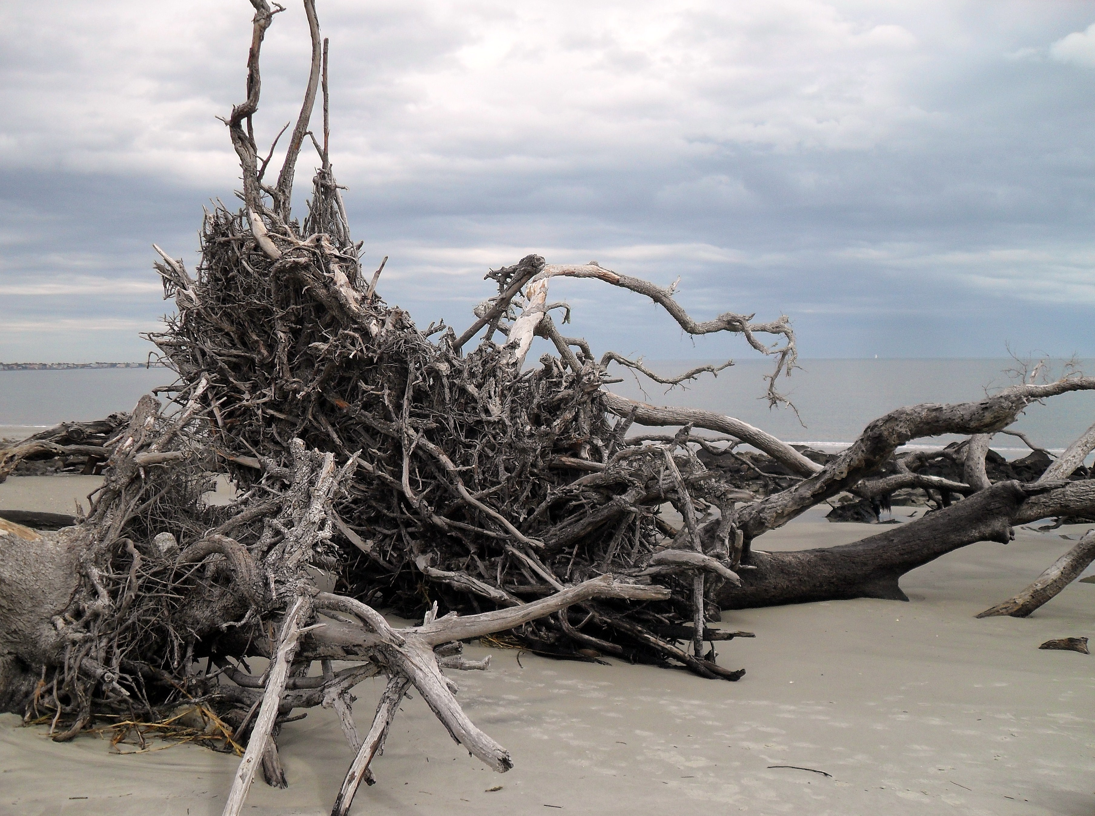 The boneyard beach rebecca heisman for What is soil made out of