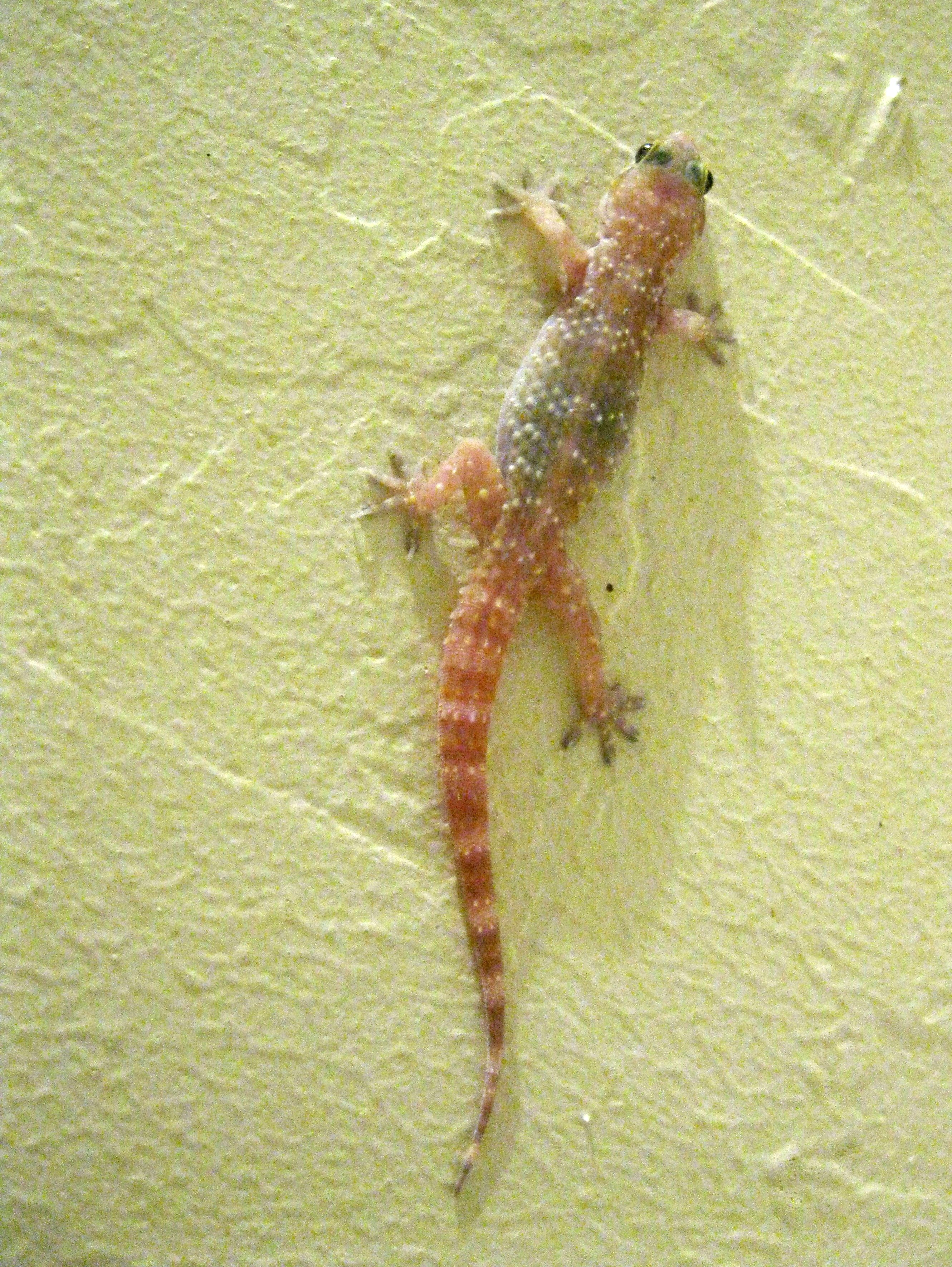 Lizards Rebecca Heisman