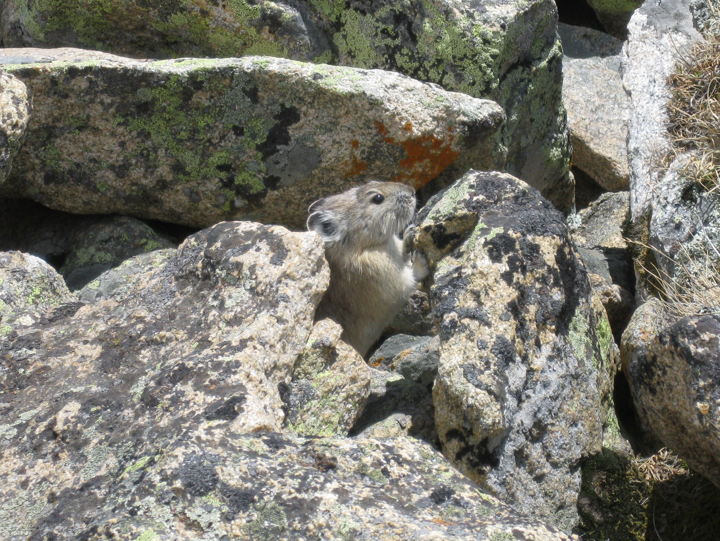 Rocky mountain national park rebecca heisman without sciox Image collections