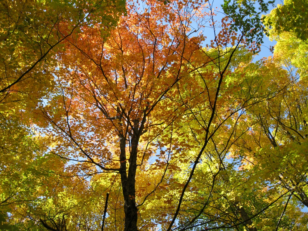 Why Do the Leaves Change Color  – Rebecca Heisman 98512084d4e7