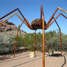 Daddy longlegs - not a spider!