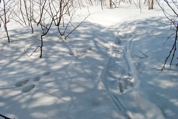 Snowshoe hare tracks on the left, otter belly slide on the right.