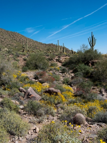 The yellow in this photo is brittlebush and the red is chuparosa.