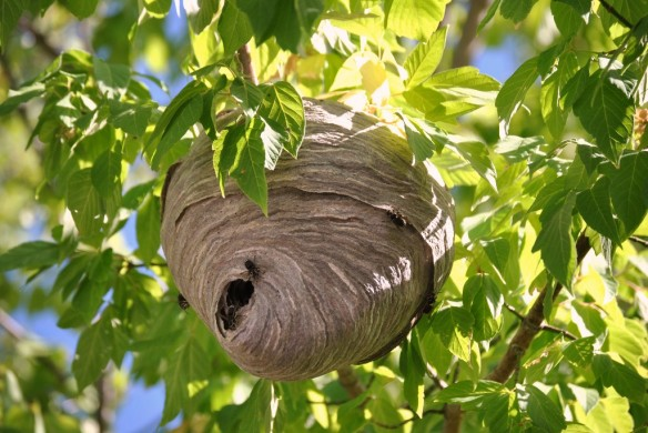 how to take down a hornets nest