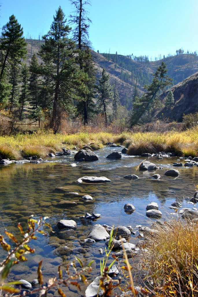 Camas Creek